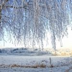 winter_tree_250
