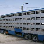 316px-Animal_transport_1