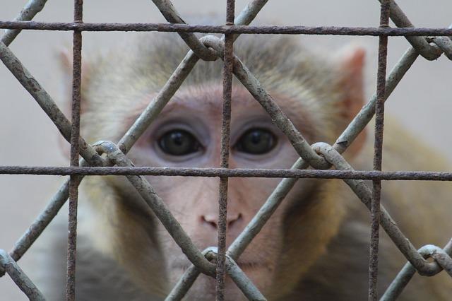 Tierversuch für Kosmetik