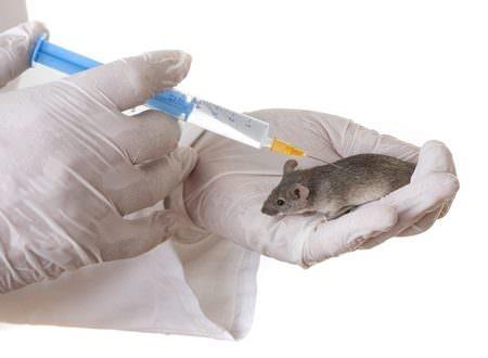 Tierversuche für Kosmetik