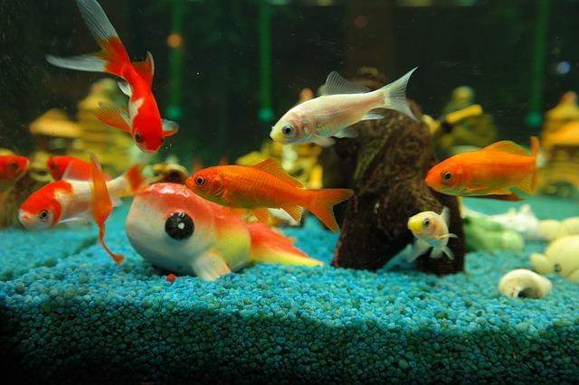 aquarium richtig reinigen sauber machen the intelligence. Black Bedroom Furniture Sets. Home Design Ideas
