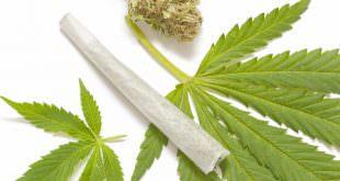 Macht Cannabis abhängig?