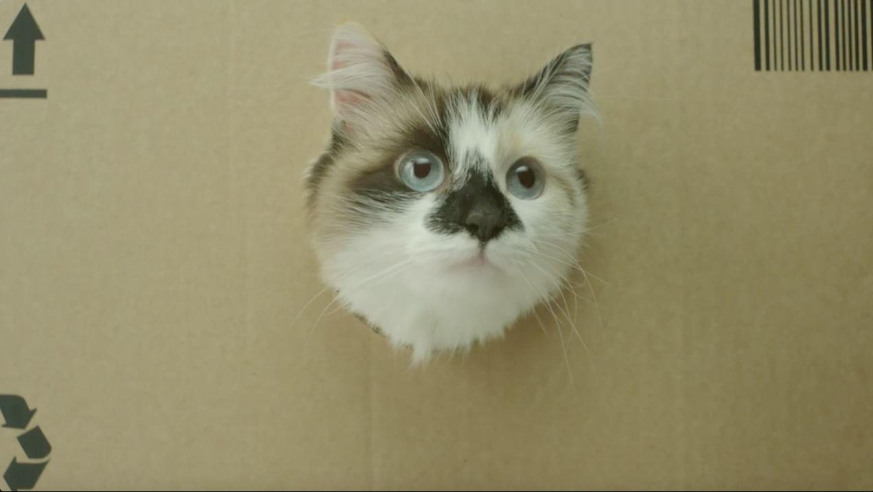 Katze von Netto