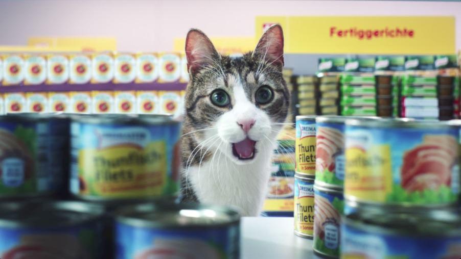 Katzenstars bei Netto
