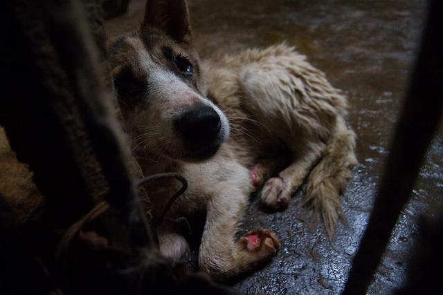 Hundeschlachthof in Zhanjiang. Mit freundlicher Genehmigung von http://www.animalequality.de