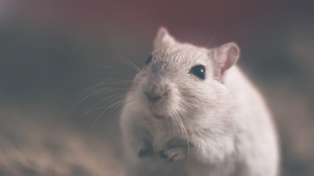 Kosmetik durch Tierversuche
