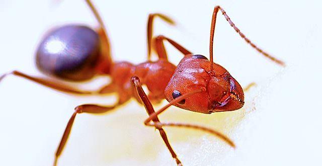 Ameisen im Haus bekämpfen The Intelligence