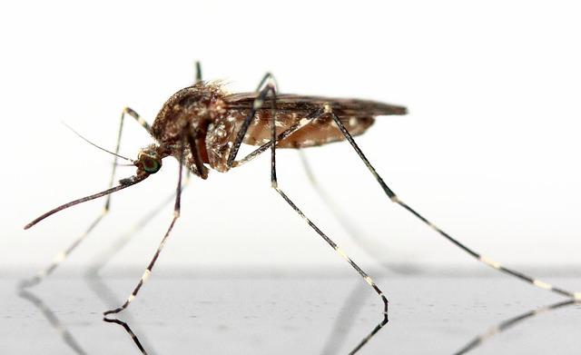 Essigwasser hilft bei Insektenstichen