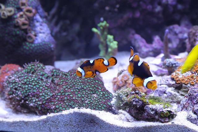 Aquarium Sauber Machen